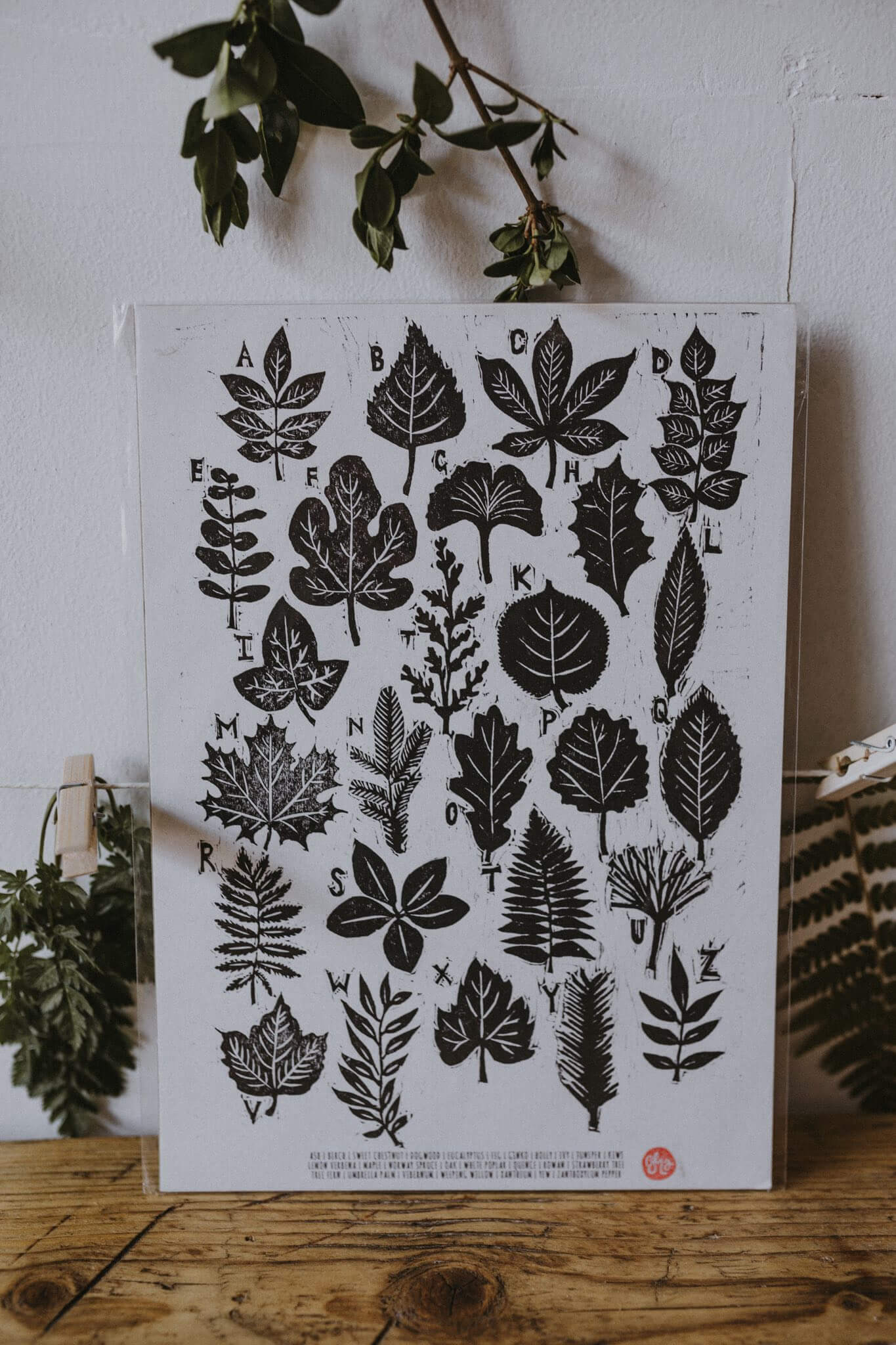 a to z of leaves print