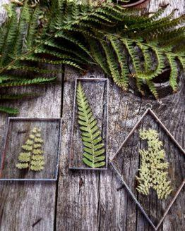 pressed fern frames