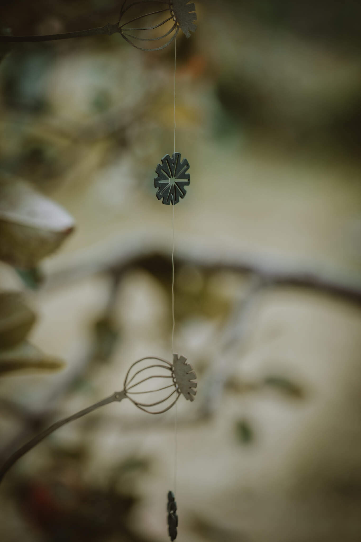 hanging poppy seed heads