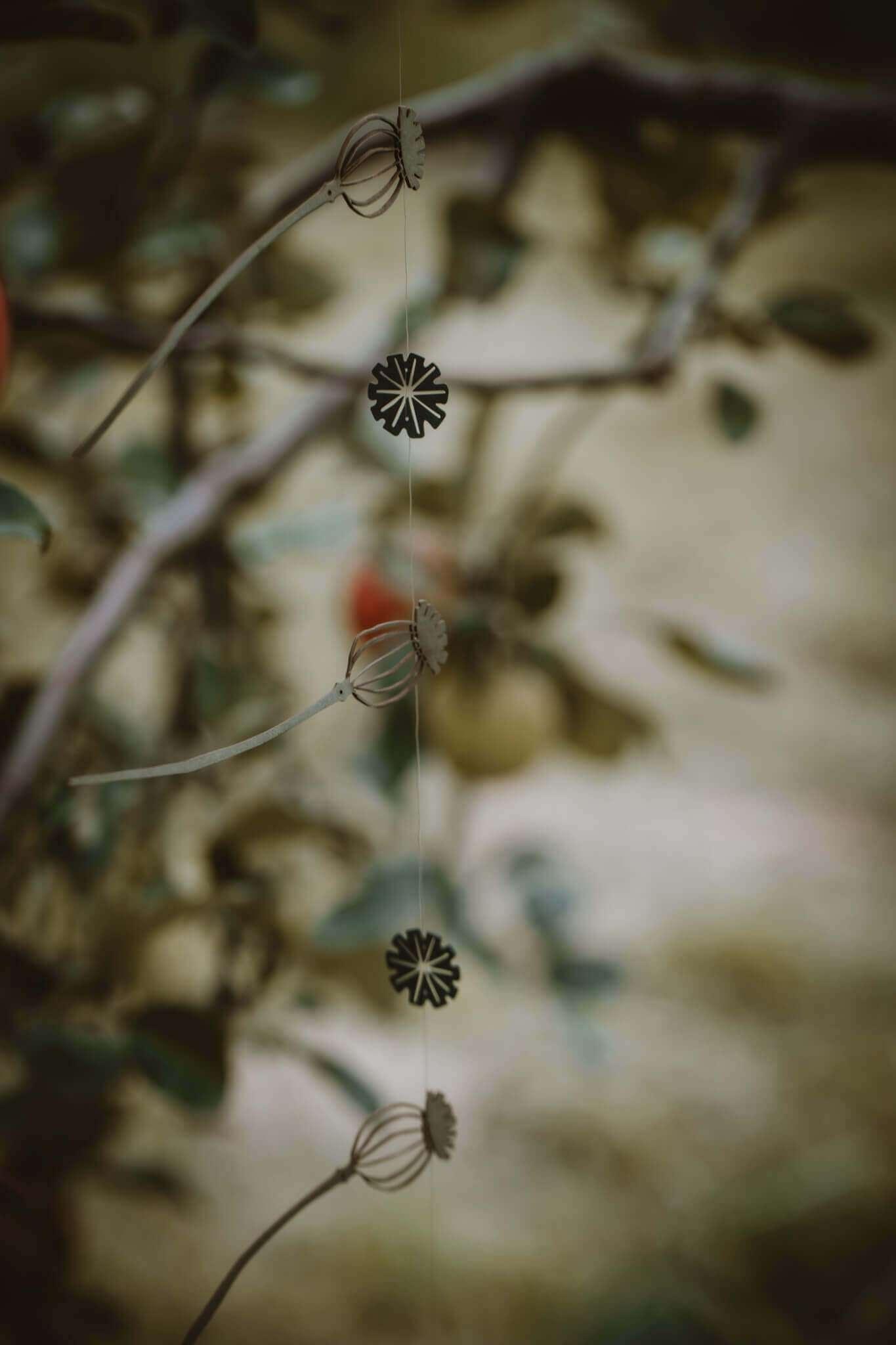 hanging poppy seedheads main shot