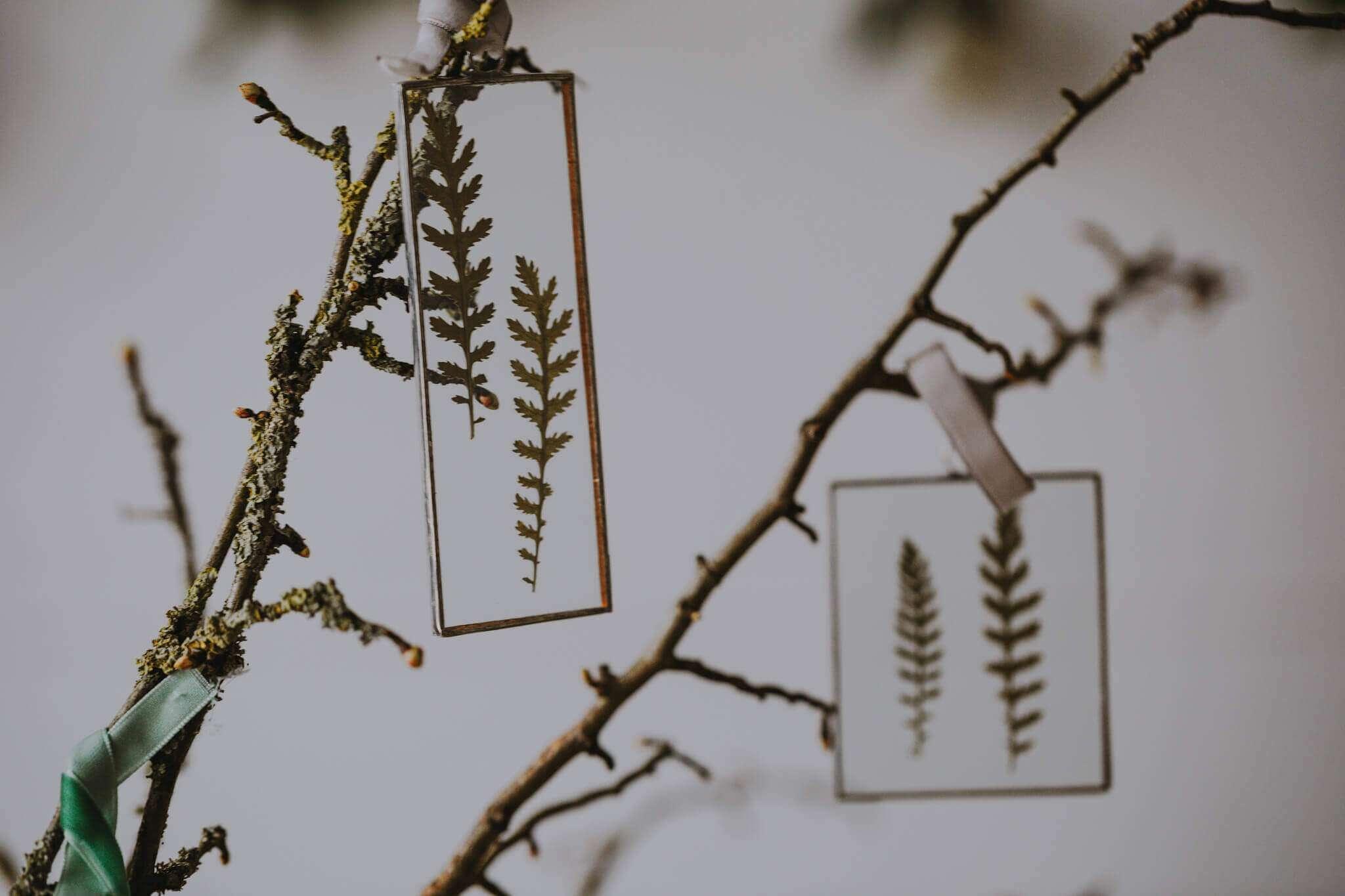 pressed fern frames