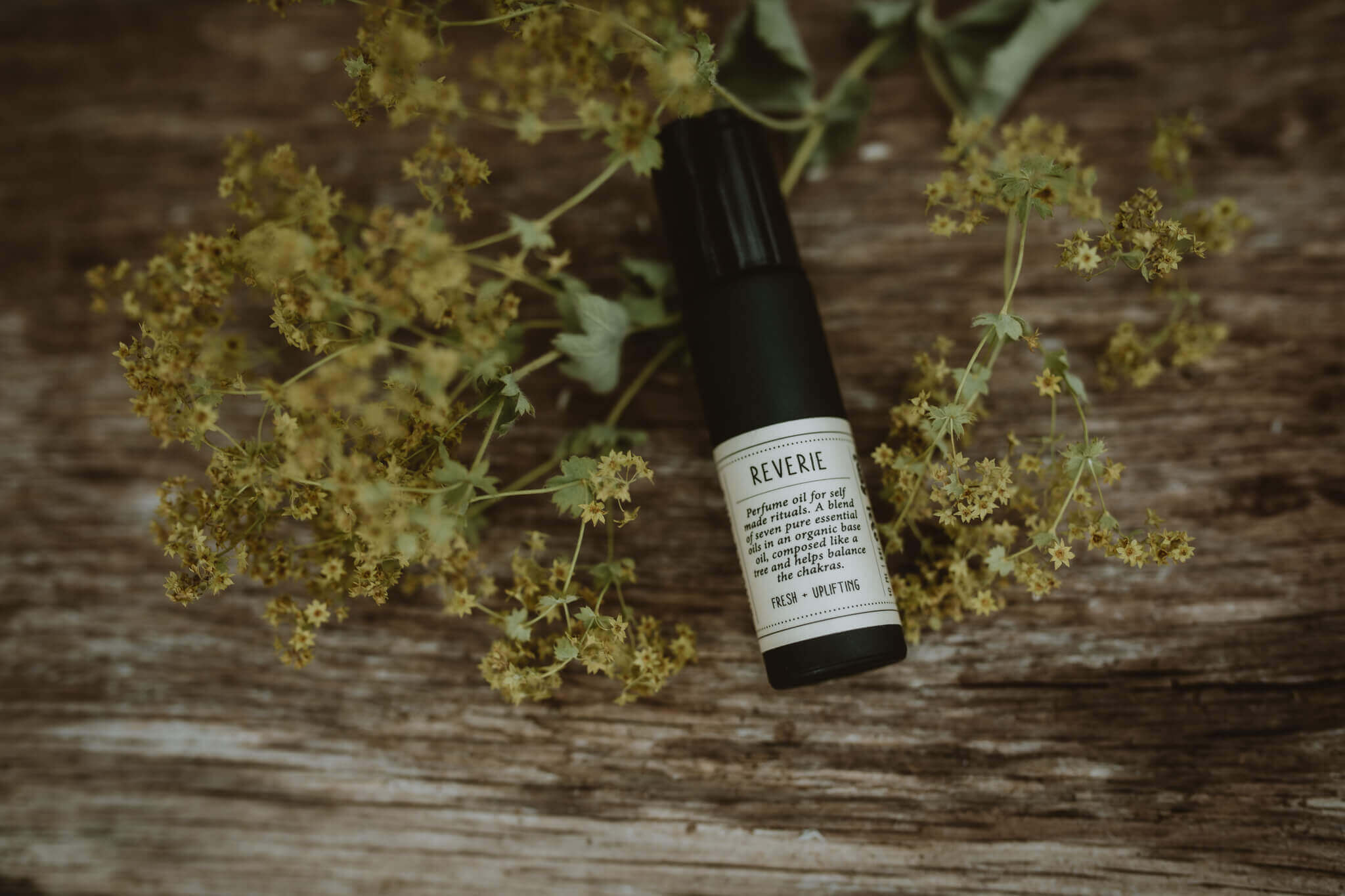 kindred and wild reverie perfume
