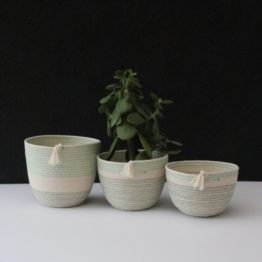 moss and mint pots trio