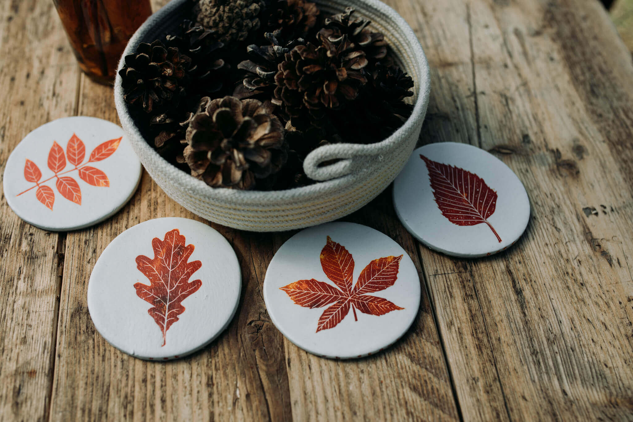 autumn leaf coaster group