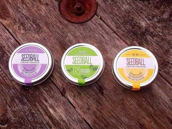 seedball pollinator mix