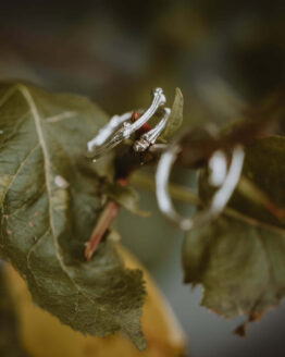 silver twig ring main