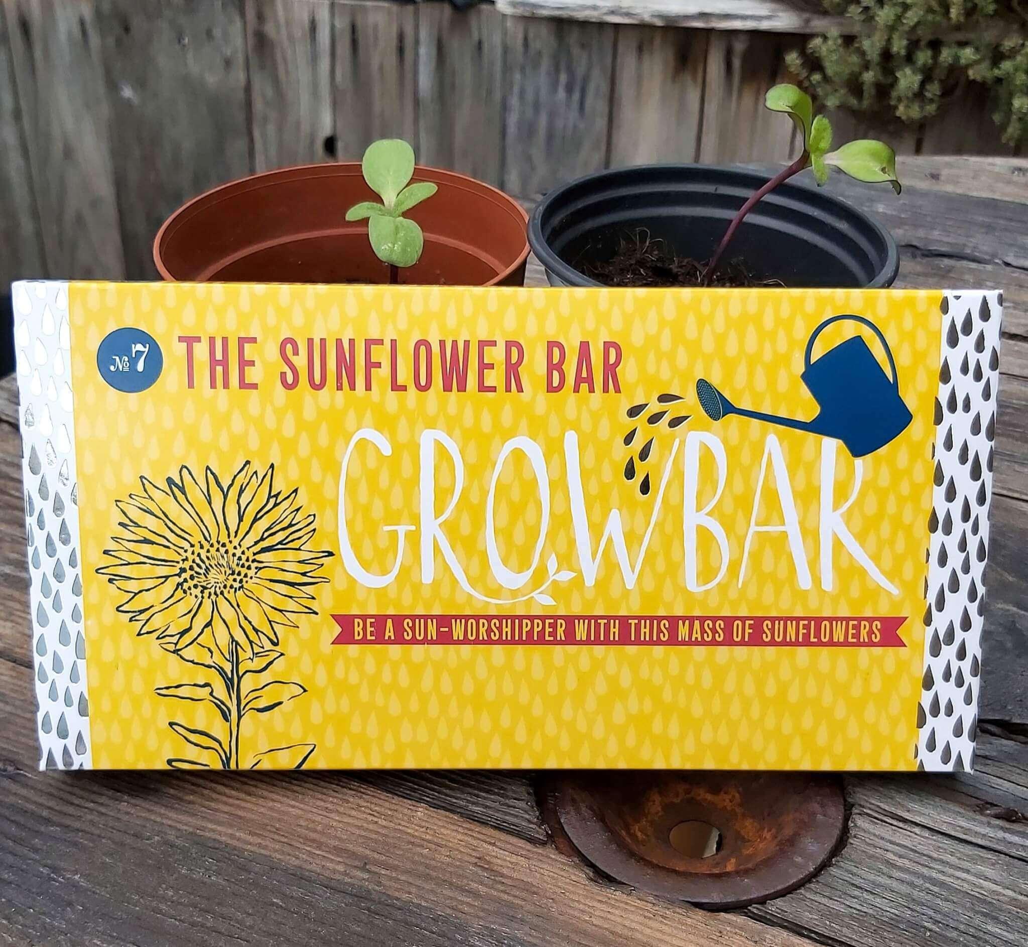 sunflower grow bar