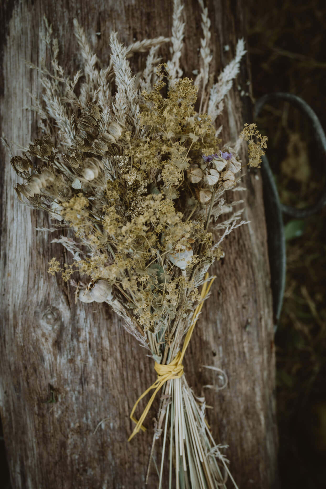 wild yellow posy front on wood